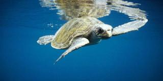 черепаха - идея для фотопечати